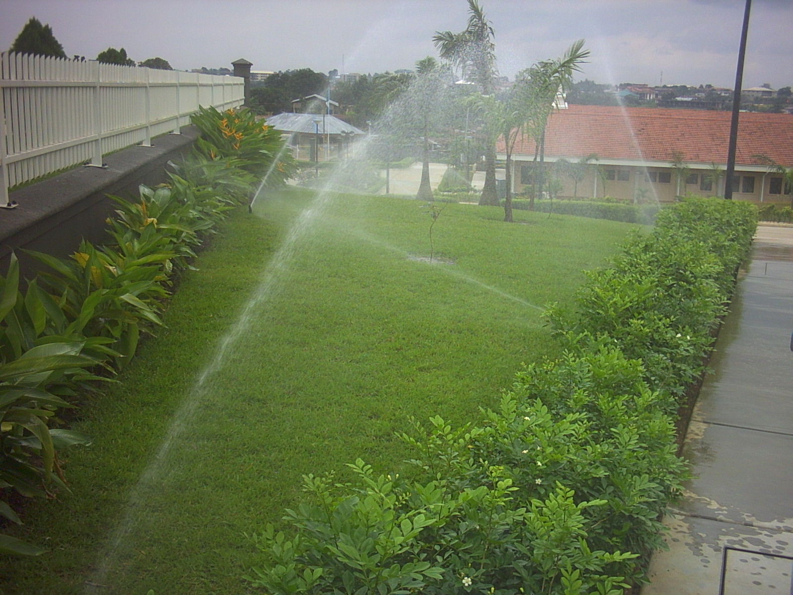 Plants being watered with an irrigation system