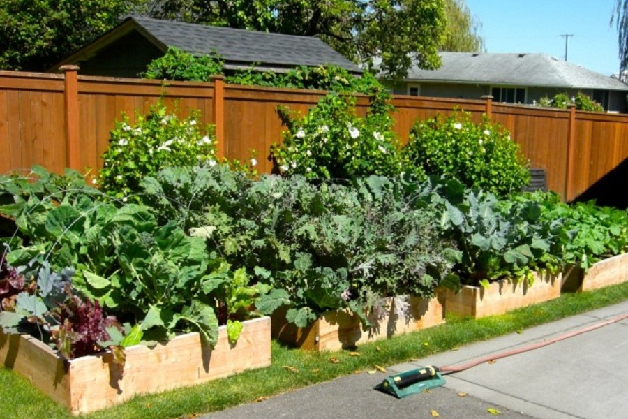 Backyard Gardening Be The Farmer Now Or Pay The Pharma Later