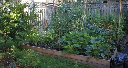 Easy Vegetables And Herbs For Your Backyard Gardening Omar