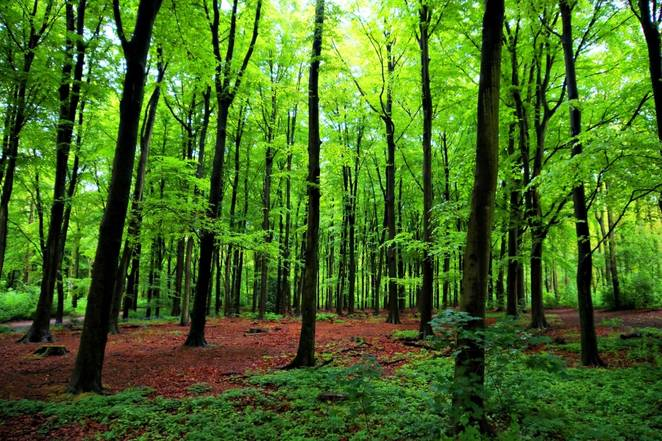 green-forest-trees.jpg.662x0_q70_crop-scale